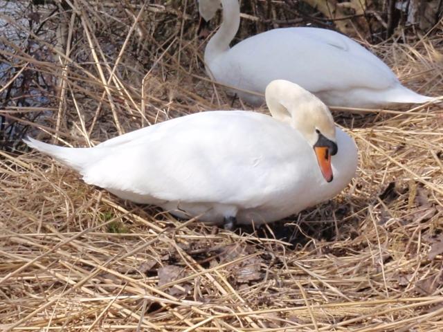 das Nest für 2013